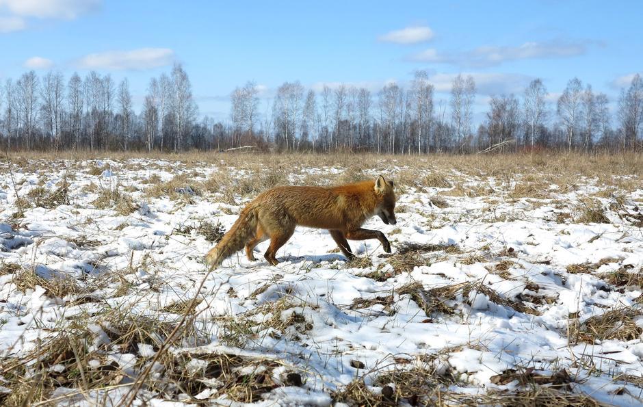 Černobil | Author: Vasily Fedosenko/Reuters/Pixsell