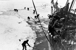 Sir Ernest Shackleton, Endurance