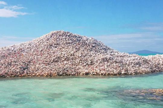 Groblje morskih školjki na Anegadi