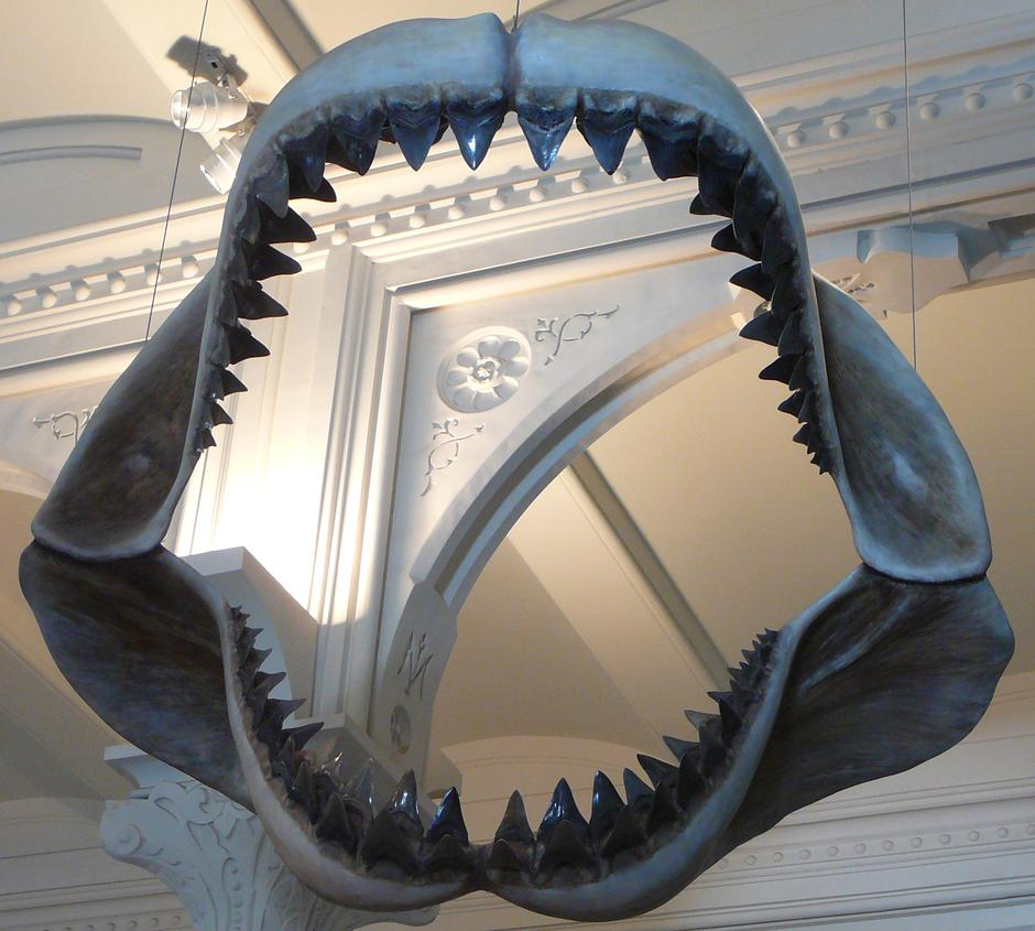 Megalodon | Author: Wikipedia