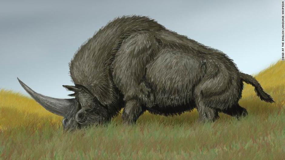 Jednorozi nosorozi | Author: Wikipedia