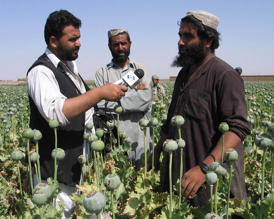 Uzgoj opijuma u Afganistanu | Author: VOA