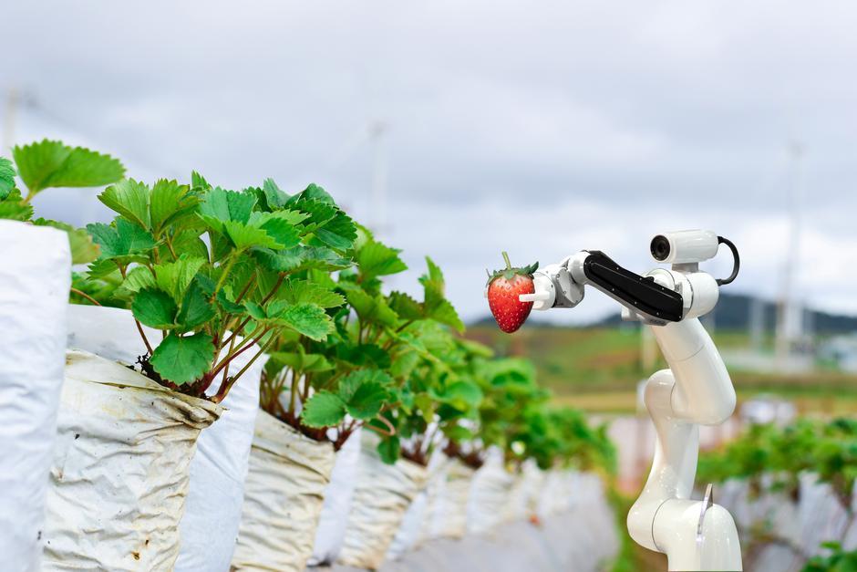 Roboti berači jagoda | Author: Getty